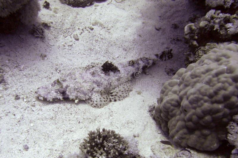 De vissen van de krokodil het rusten stock afbeeldingen