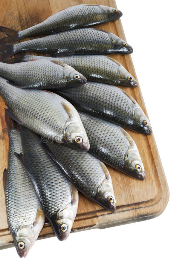 De vissen van de rivier, voorn op de keukenraad over wit royalty-vrije stock afbeeldingen