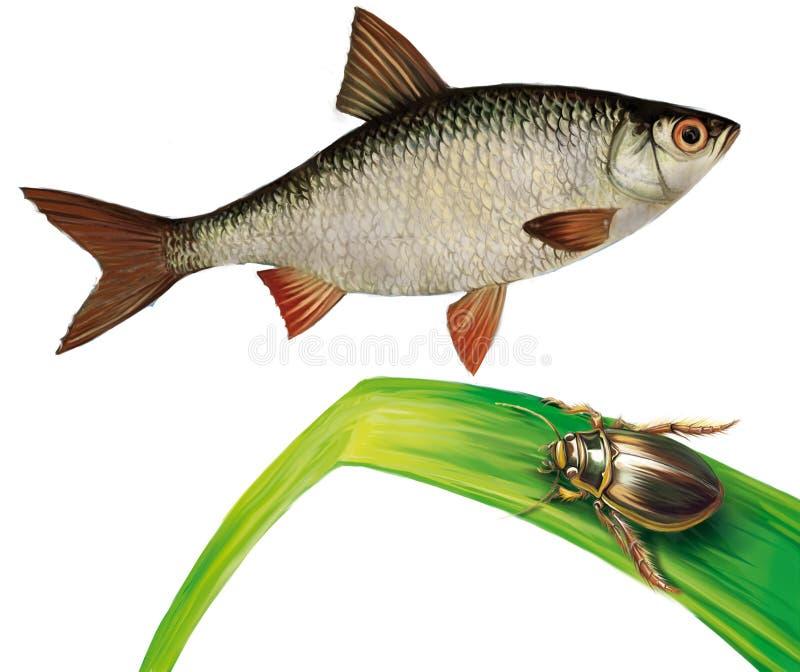 De vissen van de witvis en waterinsect op watergras vector illustratie