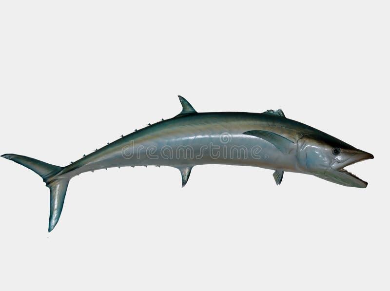 De vissen van de zoutwaterkoning stock illustratie