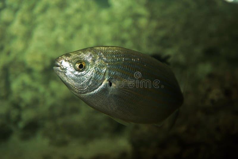 De vissen van het aquarium royalty-vrije stock foto's