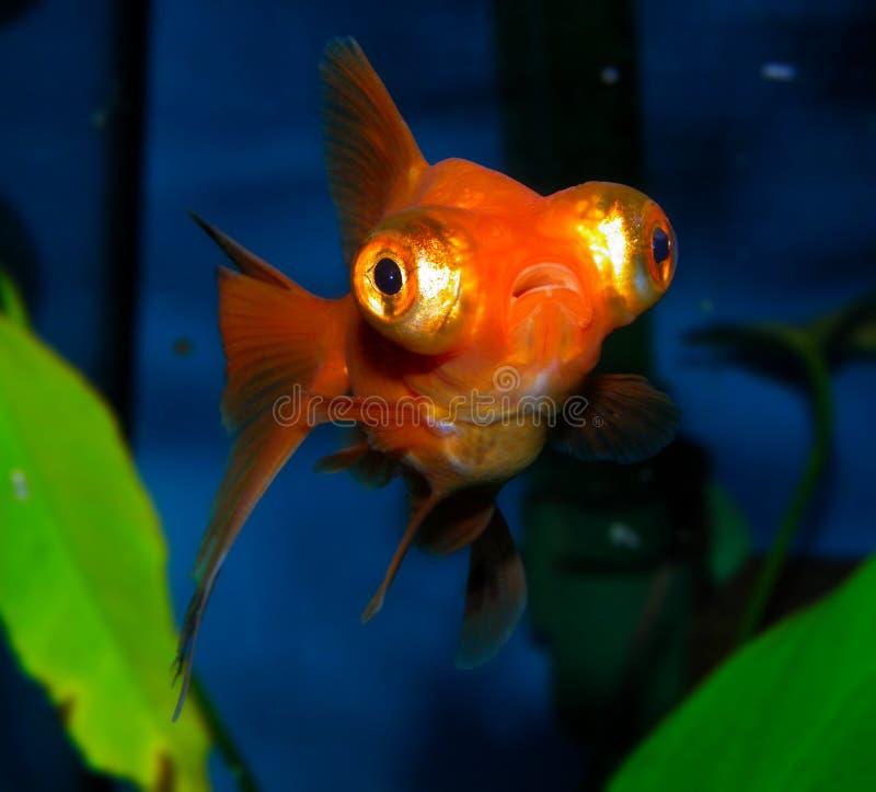 Download De vissen van het aquarium stock foto. Afbeelding bestaande uit vissen - 54086860