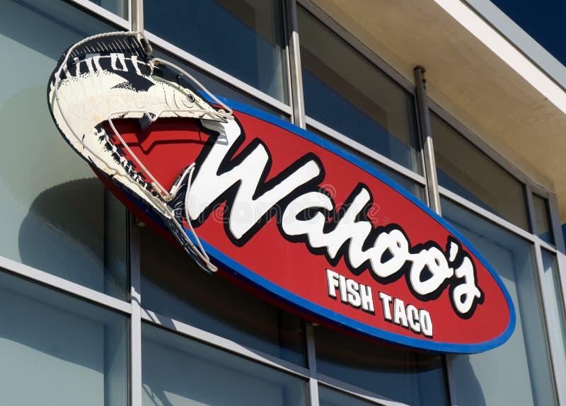 De Vissentaco van Wahoo stock afbeelding