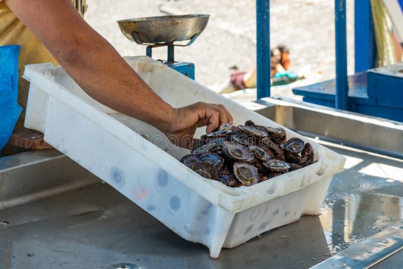 De visser na een succesvolle visserij, achter de teller verkoopt zijn vangst van vissen en schaaldieren Zachte warme zonnige dag  stock afbeelding