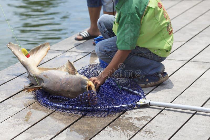 De visser ving een reuzekatvis royalty-vrije stock foto