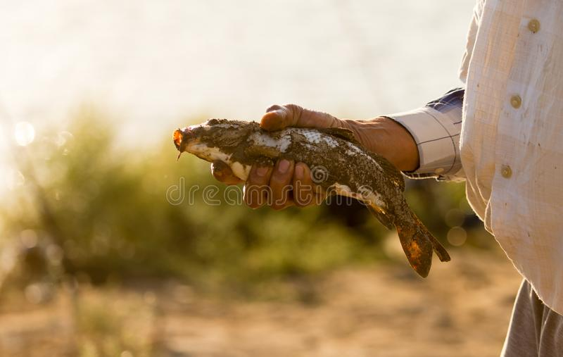 De visser ving de vissen op het aas stock afbeeldingen