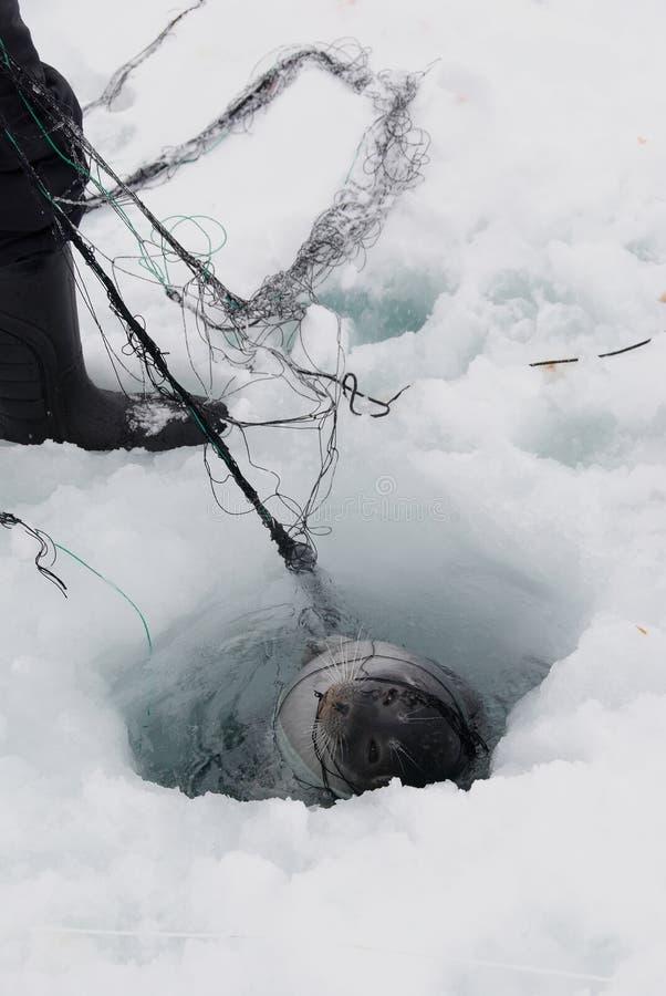 De visserij van de verbinding stock foto's