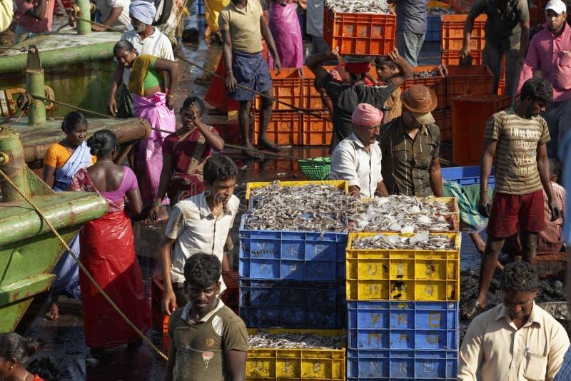 De vissers die de verse vangst overbrengen van boten voor wegvervoer, Mangalore, Karnataka, India stock foto