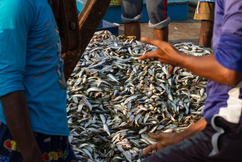 De vissers komen overeen om een grote partij verse vissen te verkopen De visserij van dok in zuidelijk India royalty-vrije stock afbeelding