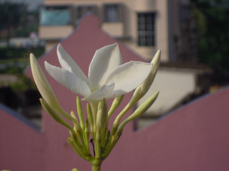 De vita blommorna på taket av ett hus royaltyfri foto