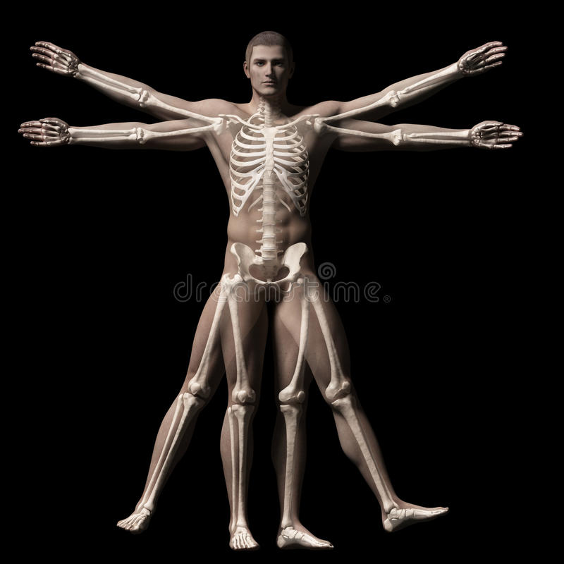 De vitruvian man - skelet vector illustratie