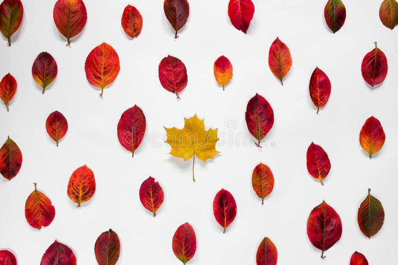 De vlakke samenstelling van de gele contrasten van het esdoornblad met de rode herfst verlaat ornament op witte achtergrond royalty-vrije stock afbeelding