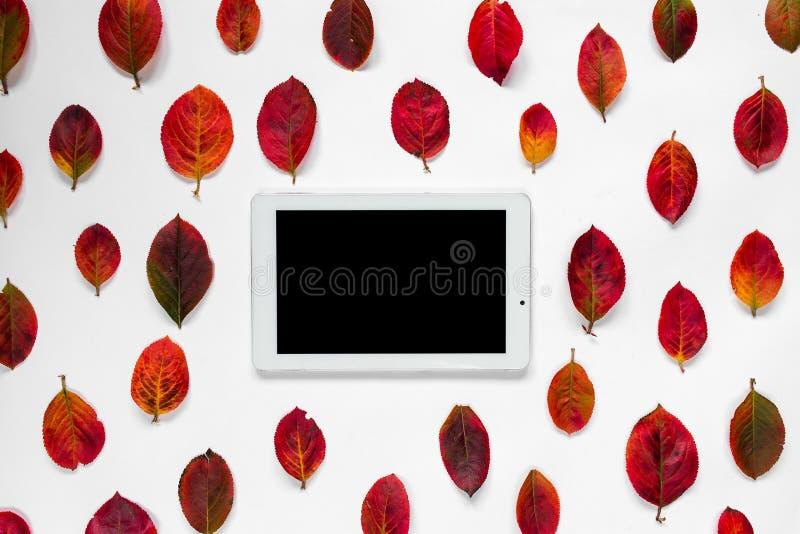De vlakke samenstelling van tabletpc, de rode herfst verlaat ornament op witte achtergrond stock fotografie