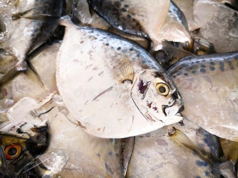 De vlakke zilveren vissen zijn niet vers met ijs in het dienblad, waarvoor royalty-vrije stock afbeeldingen
