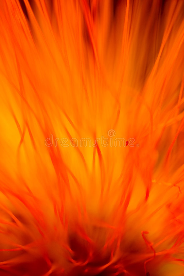 De vlamsamenvatting van de bloem royalty-vrije stock afbeeldingen