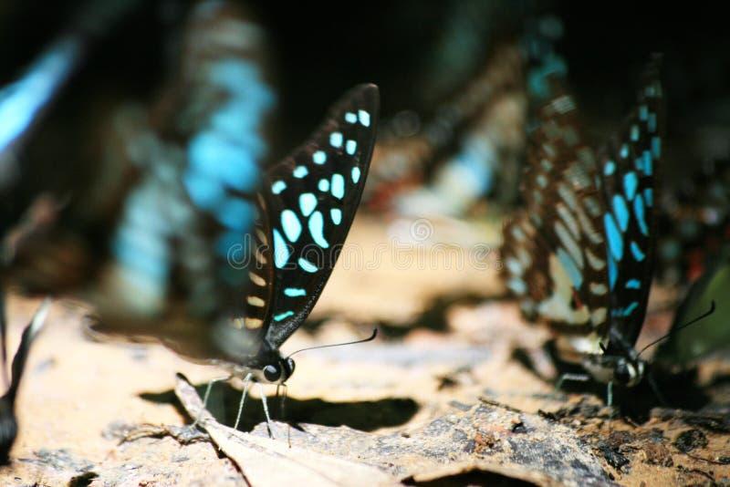 De vlek die en sluit omhoog van vlinder concentreren zich stock foto