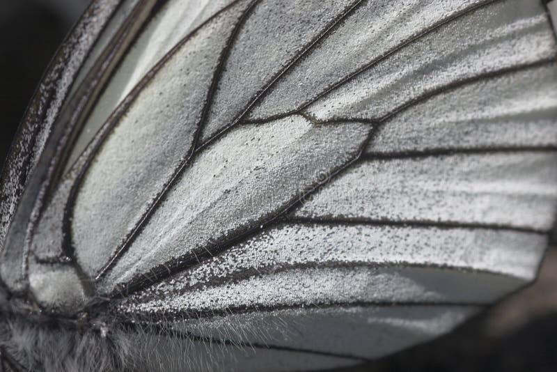 De vleugel dichte omhooggaand van de vlinder stock foto