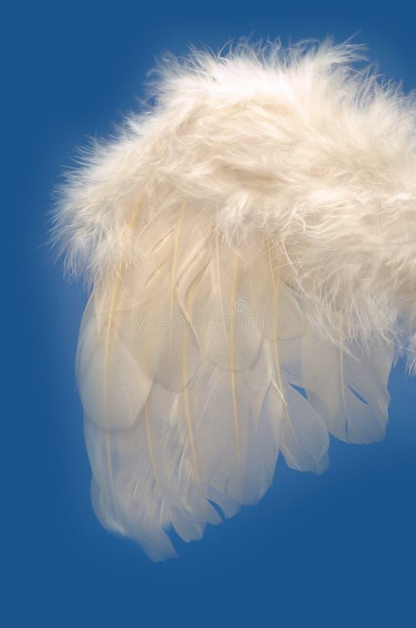 De vleugel van de engel royalty-vrije stock afbeeldingen