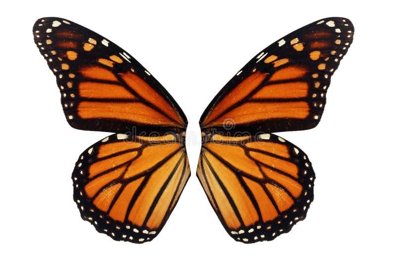 De Vleugel van de monarchvlinder stock afbeeldingen