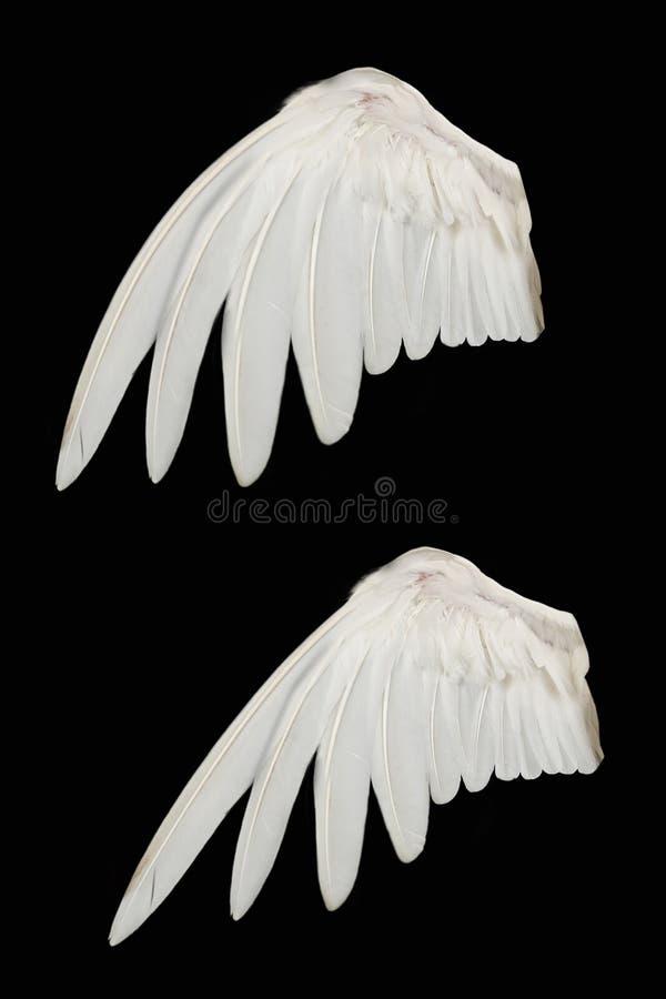 De Vleugel van de vogel stock foto