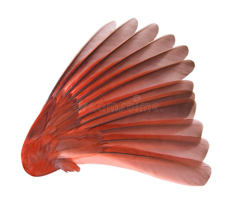 De Vleugel van de vogel met het Knippen van Weg stock fotografie