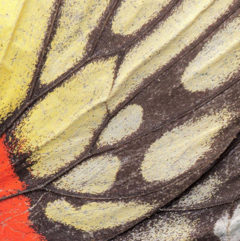 De vleugelpatroon van de vlinder royalty-vrije stock foto