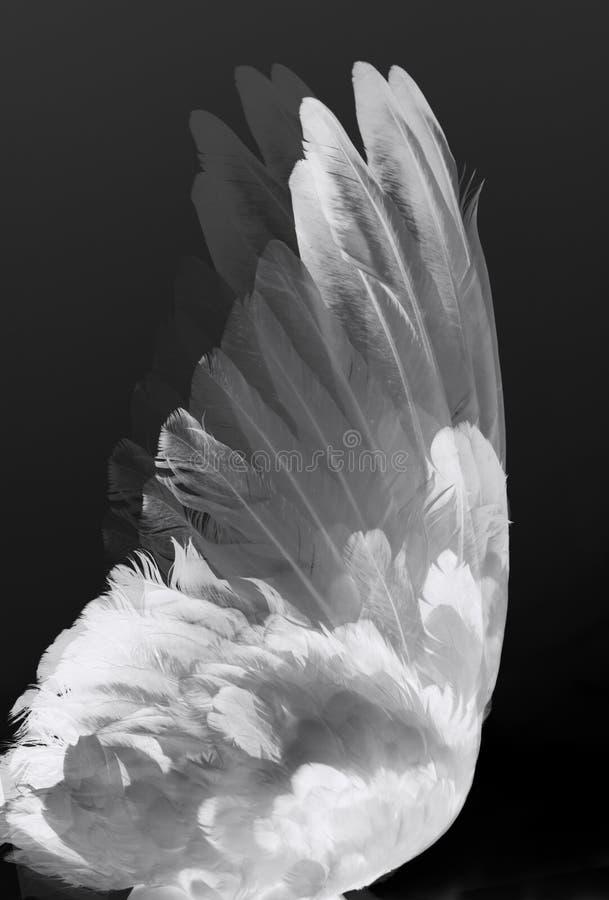 De vleugels van de engel stock afbeeldingen