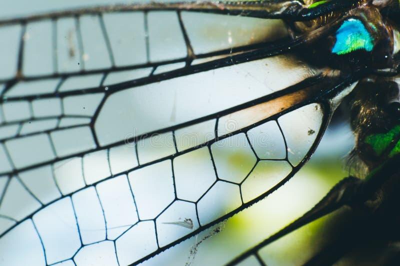 De vleugelsdetails van Damselfly stock afbeelding