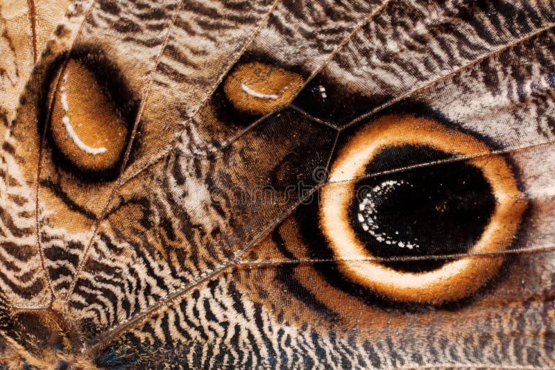 De vleugeltextuur van de vlinder royalty-vrije stock afbeelding