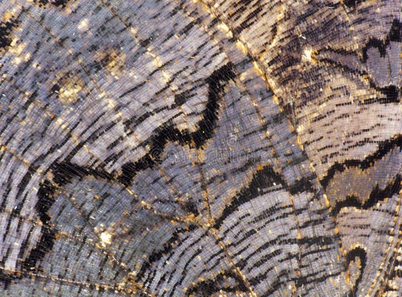 De vleugeltextuur van de vlinder royalty-vrije stock afbeeldingen
