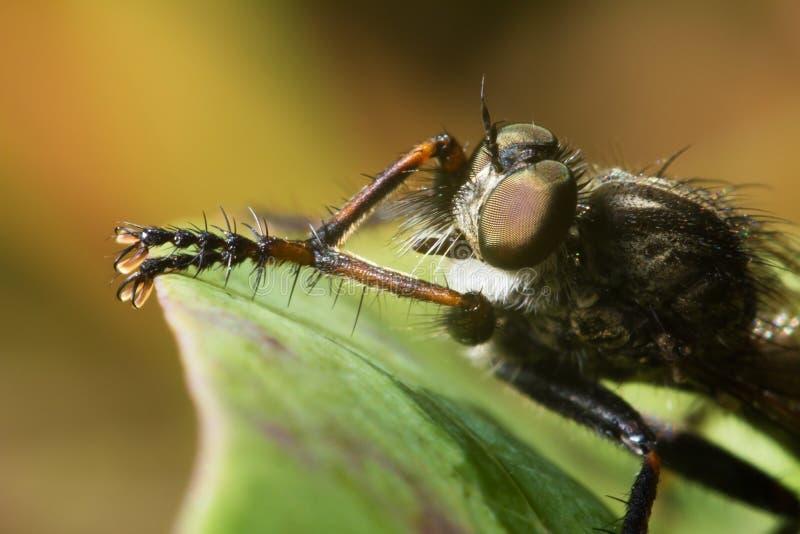 De vlieg, libel heeft een rust onder de zon Sluit omhoog wildlife stock foto's
