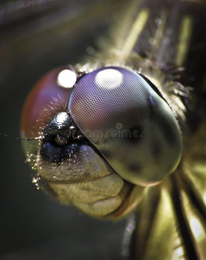 De vlieg van de draak royalty-vrije stock afbeelding