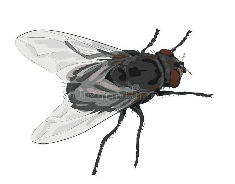 De vlieg van het insect die op witte achtergrond wordt geïsoleerd. royalty-vrije illustratie