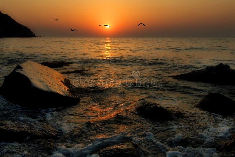 De vlieg van zeemeeuwen tegen een het toenemen zon royalty-vrije stock foto's