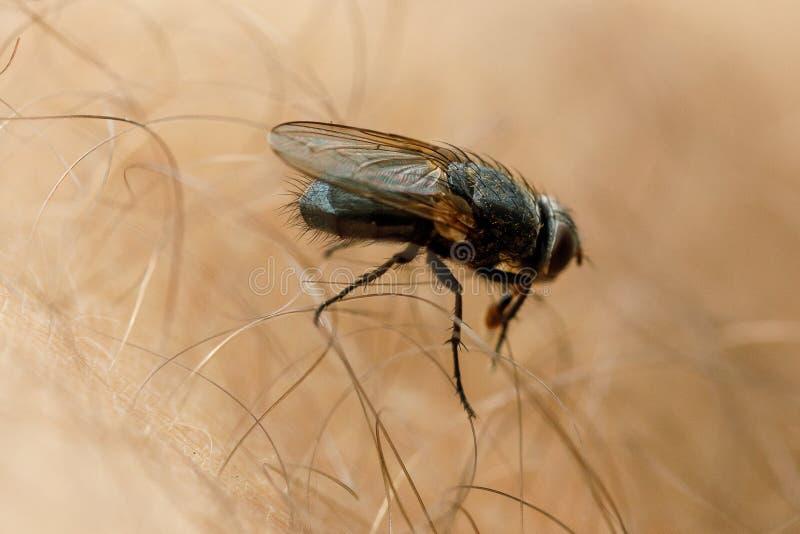 De vlieg zit op menselijke huid royalty-vrije stock afbeeldingen