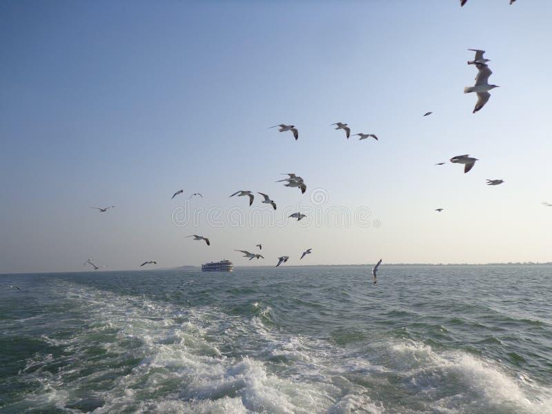 de vliegende hemel van de zeemeeuwvogel in stmartin stock fotografie