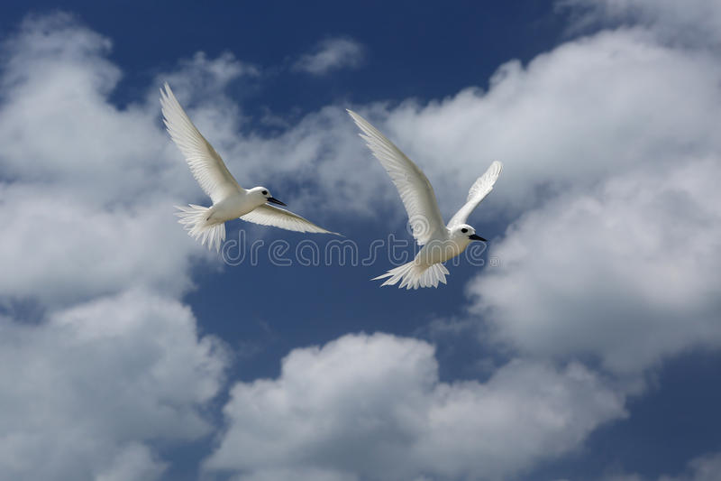 De vliegende Vogels van de Feestern royalty-vrije stock foto's
