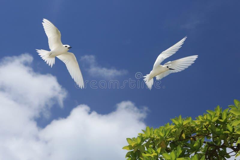 De vliegende Vogels van de Feestern stock afbeeldingen