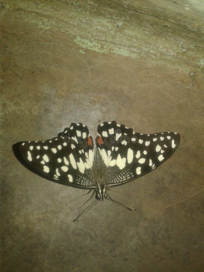 De vlinder is butiful royalty-vrije stock foto's