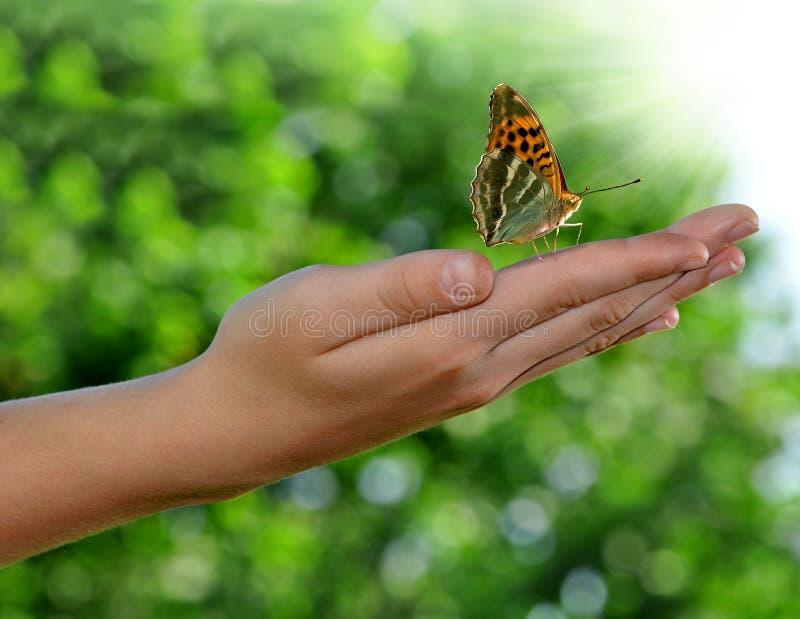De vlinder op childen hand royalty-vrije stock foto's