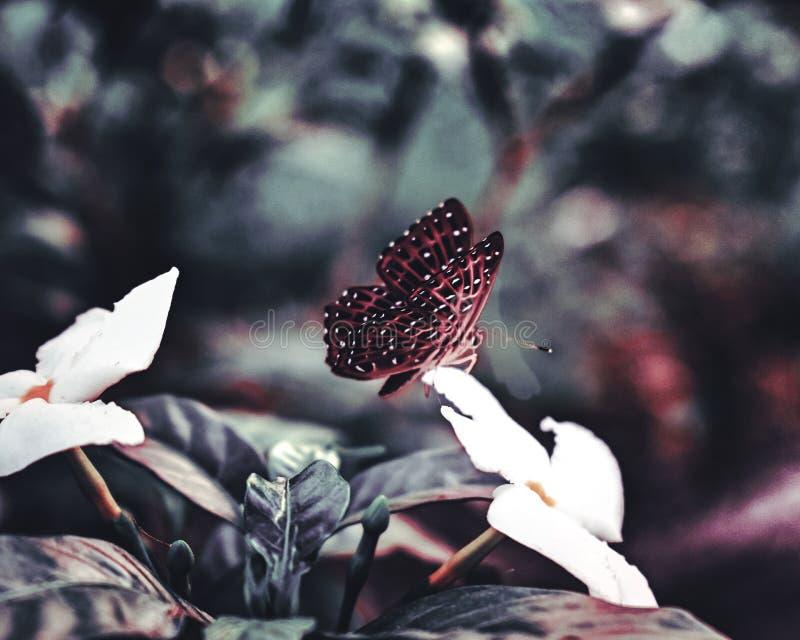 De vlinder stond weg te vliegen op het punt royalty-vrije stock foto