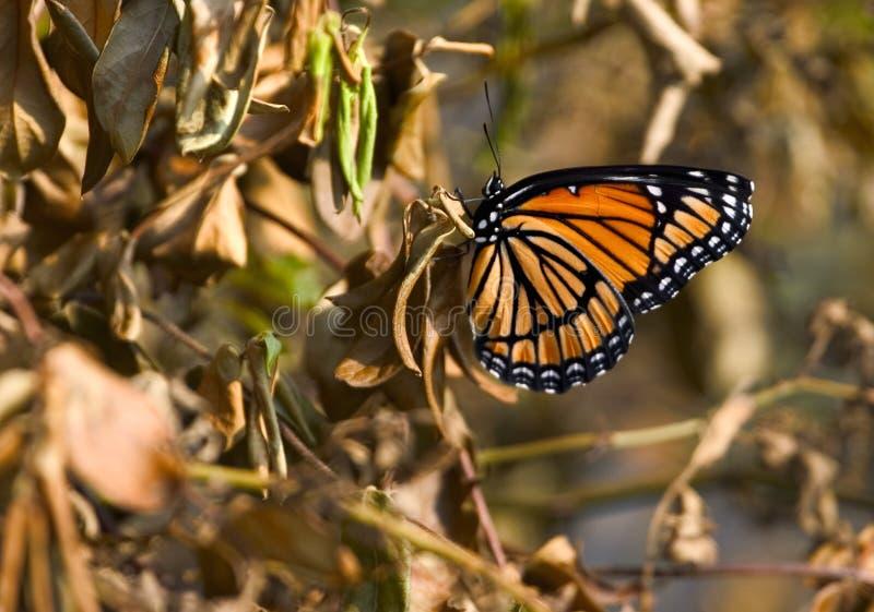 De vlinder van de herfst royalty-vrije stock foto