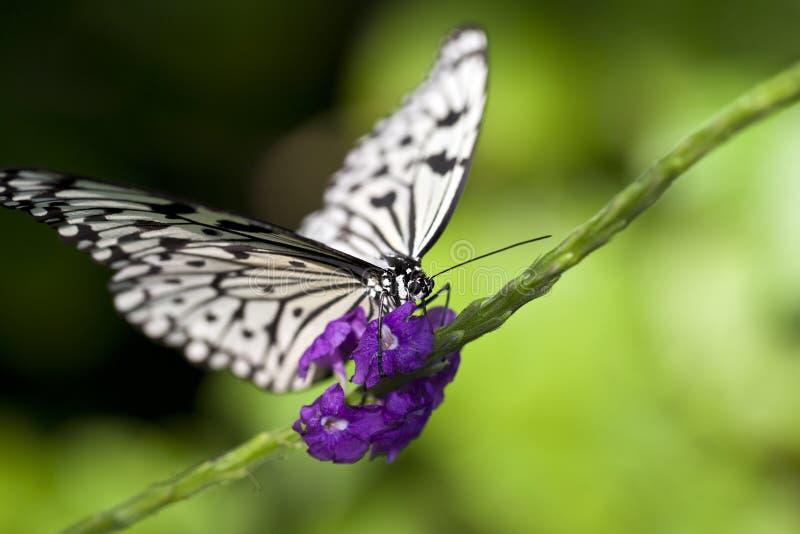 De Vlinder van de Vlieger van het document royalty-vrije stock foto