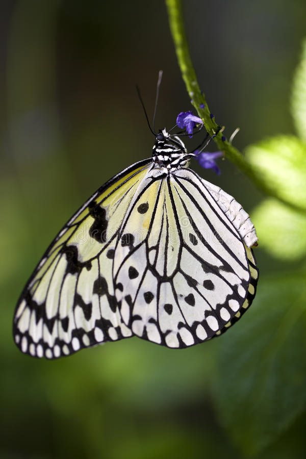 De Vlinder van de Vlieger van het document royalty-vrije stock afbeelding
