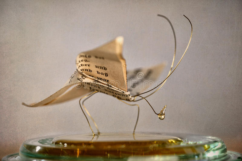 De vlinder van het document stock afbeelding