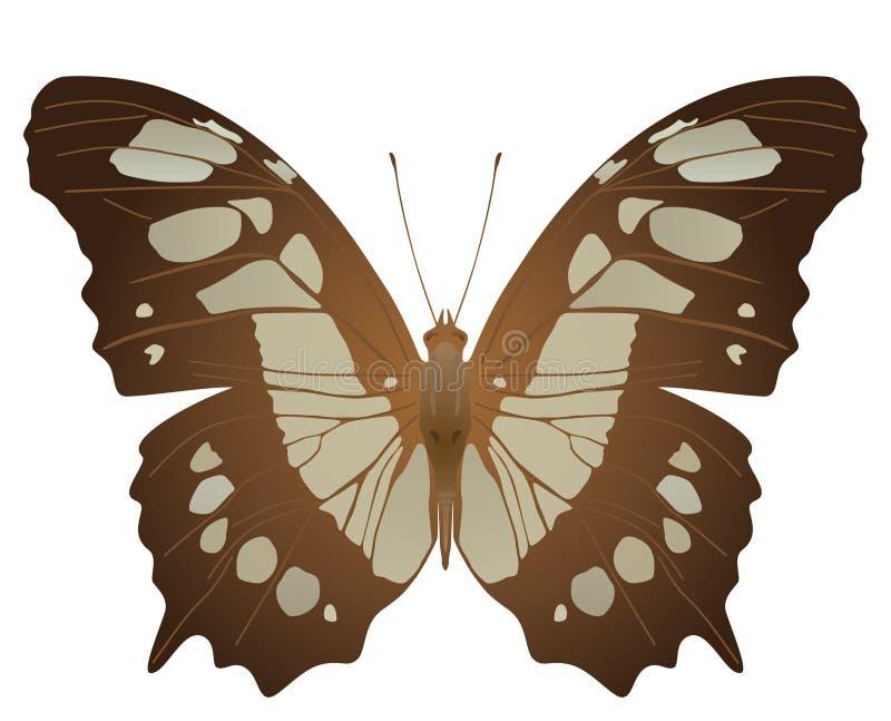De vlinder van het malachiet royalty-vrije illustratie