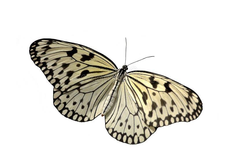De Vlinder van het rijstpapier stock afbeelding
