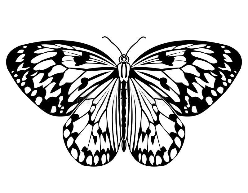 De vlinder, zwart-wit tekening in zwart-wit, isoleerde tropische vlinder op witte achtergrond royalty-vrije illustratie