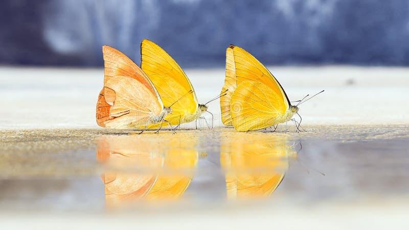 De vlinders lijken vroeg in de zomer royalty-vrije stock foto