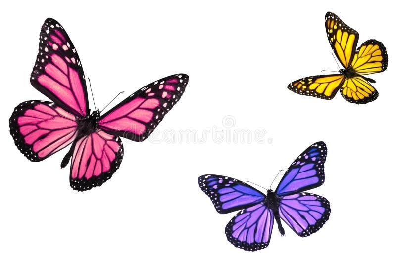 De Vlinders van de monarch die op Wit worden geïsoleerdt stock fotografie